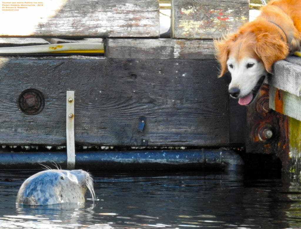 Dog-meets-Popeye-SKR