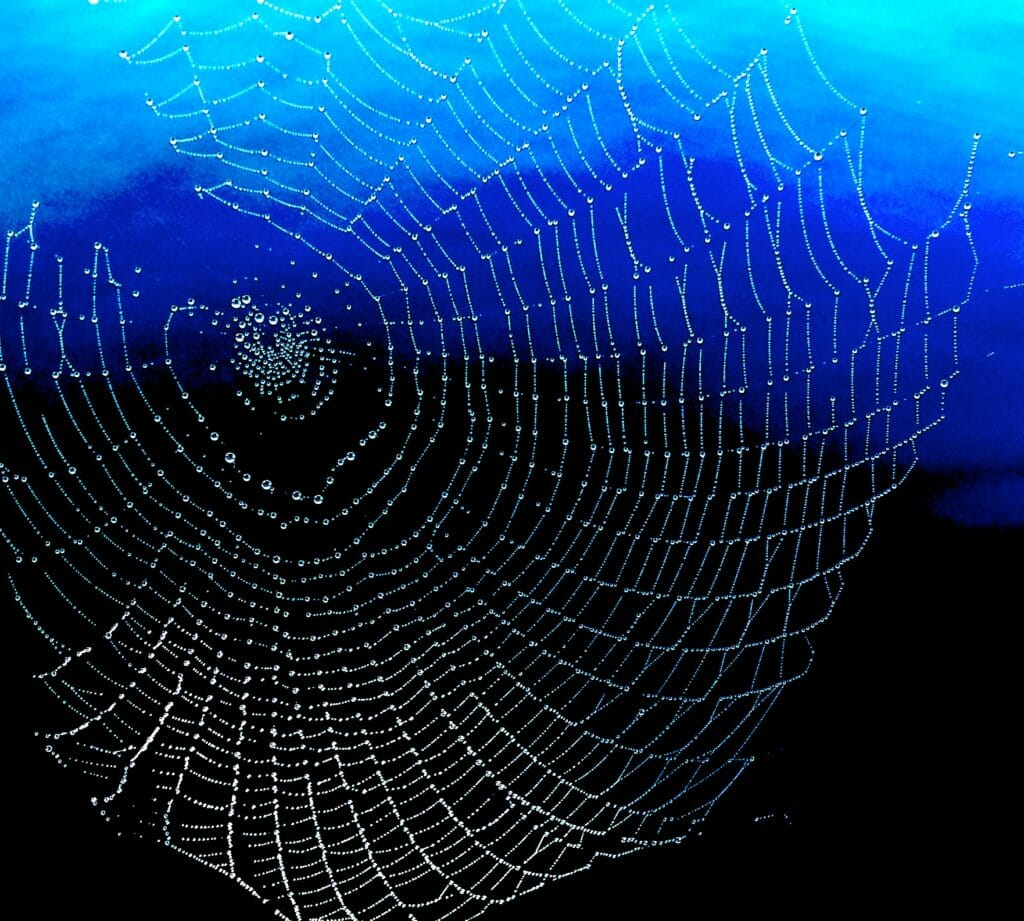 spider-web-constellation
