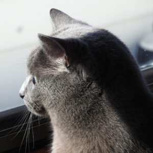 izzy-window-duckwatch